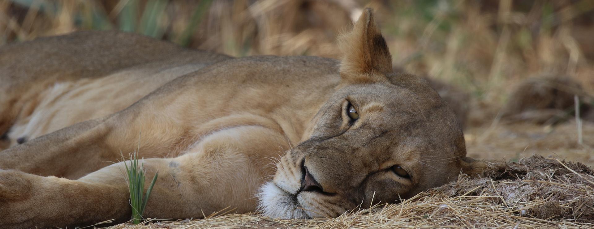 KENYA: Masai Mara e Amboseli