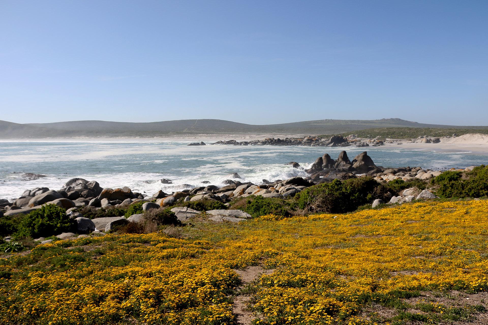 SUDAFRICA Deserto fiorito e balene