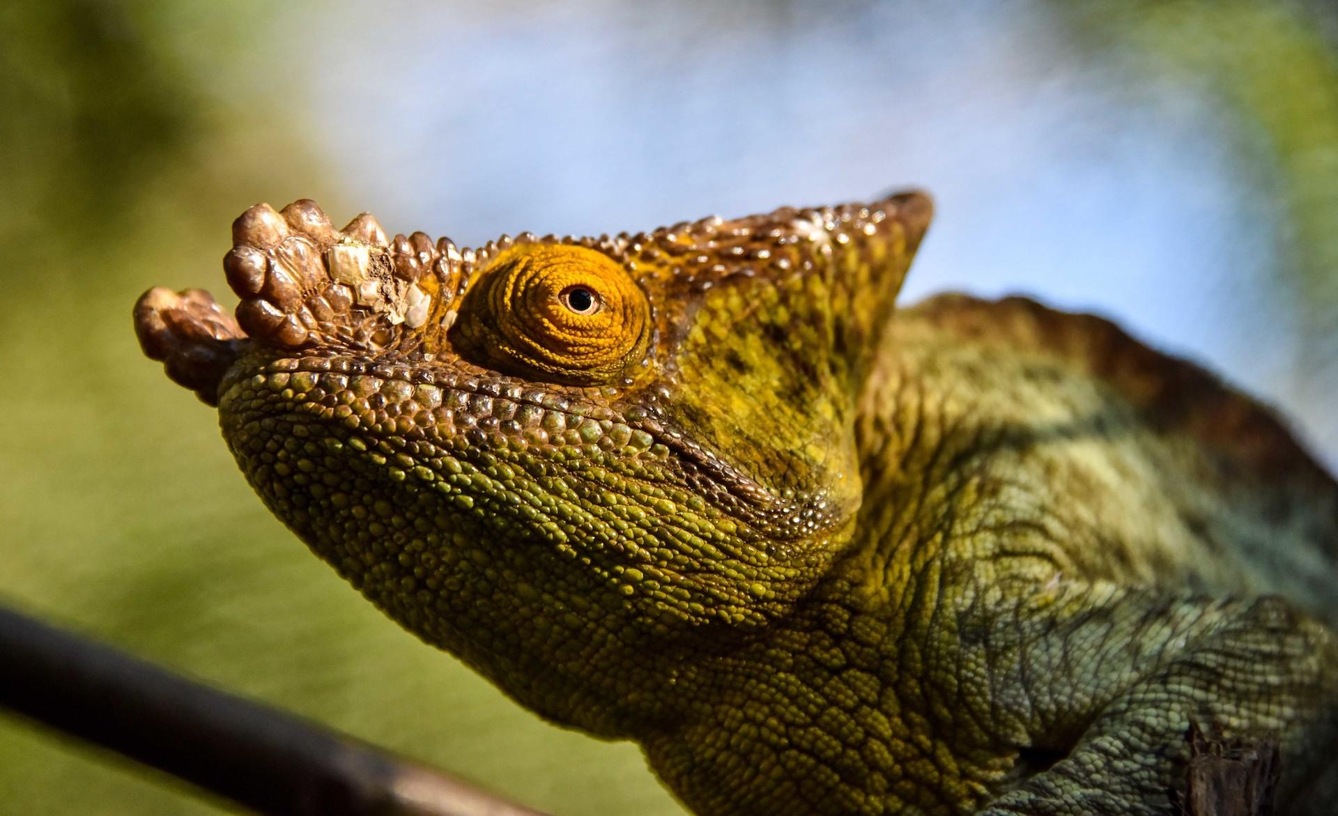 MADAGASCAR: Il lusso selvaggio