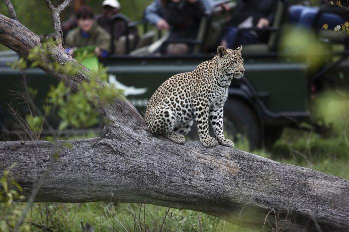 SUDAFRICA Dal Kruger a Cape Town