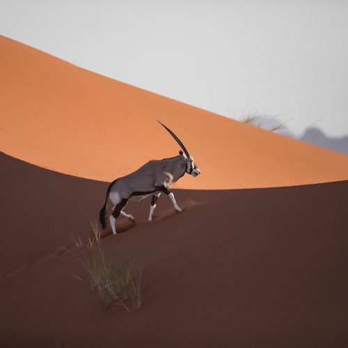 NAMIBIA Deserti e savana