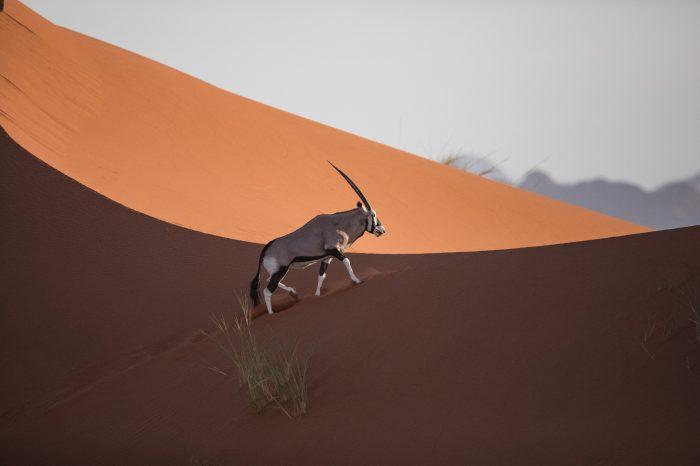 NAMIBIA: Deserts and savannah