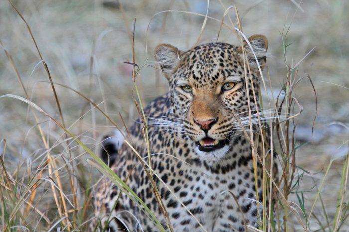 ZAMBIA: Il fascino della natura