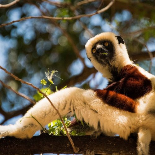 MADAGASCAR I parchi del nord e Nosy Be