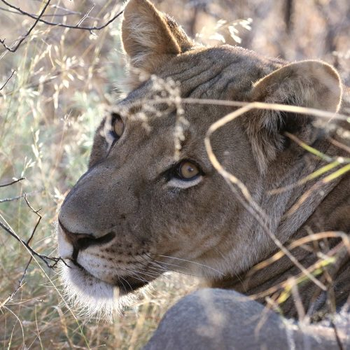 BOTSWANA: Kalahari adventure