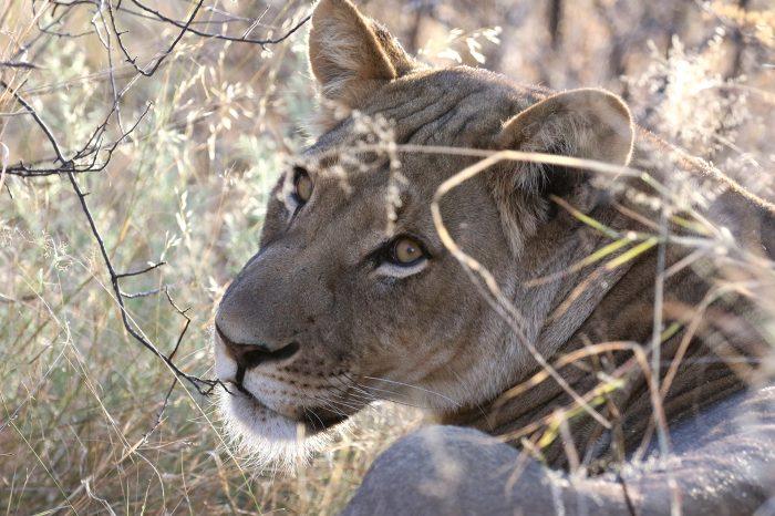 Kalahari adventure